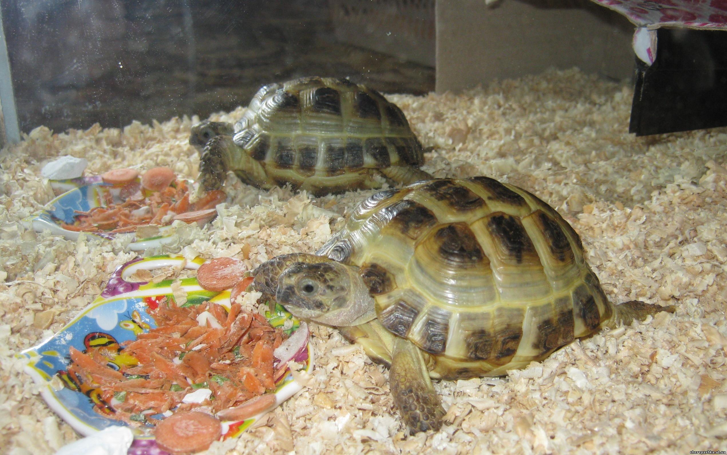 Террариум для среднеазиатской черепахи своими руками фото фото 34